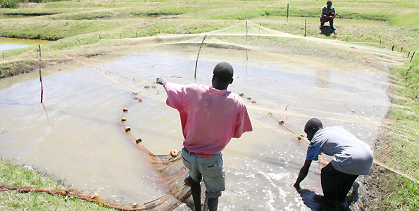 Fish farming good investment, profitable – Zambia Daily Mail