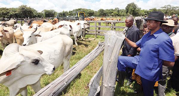 Livestock sector poised to improve in Muchinga