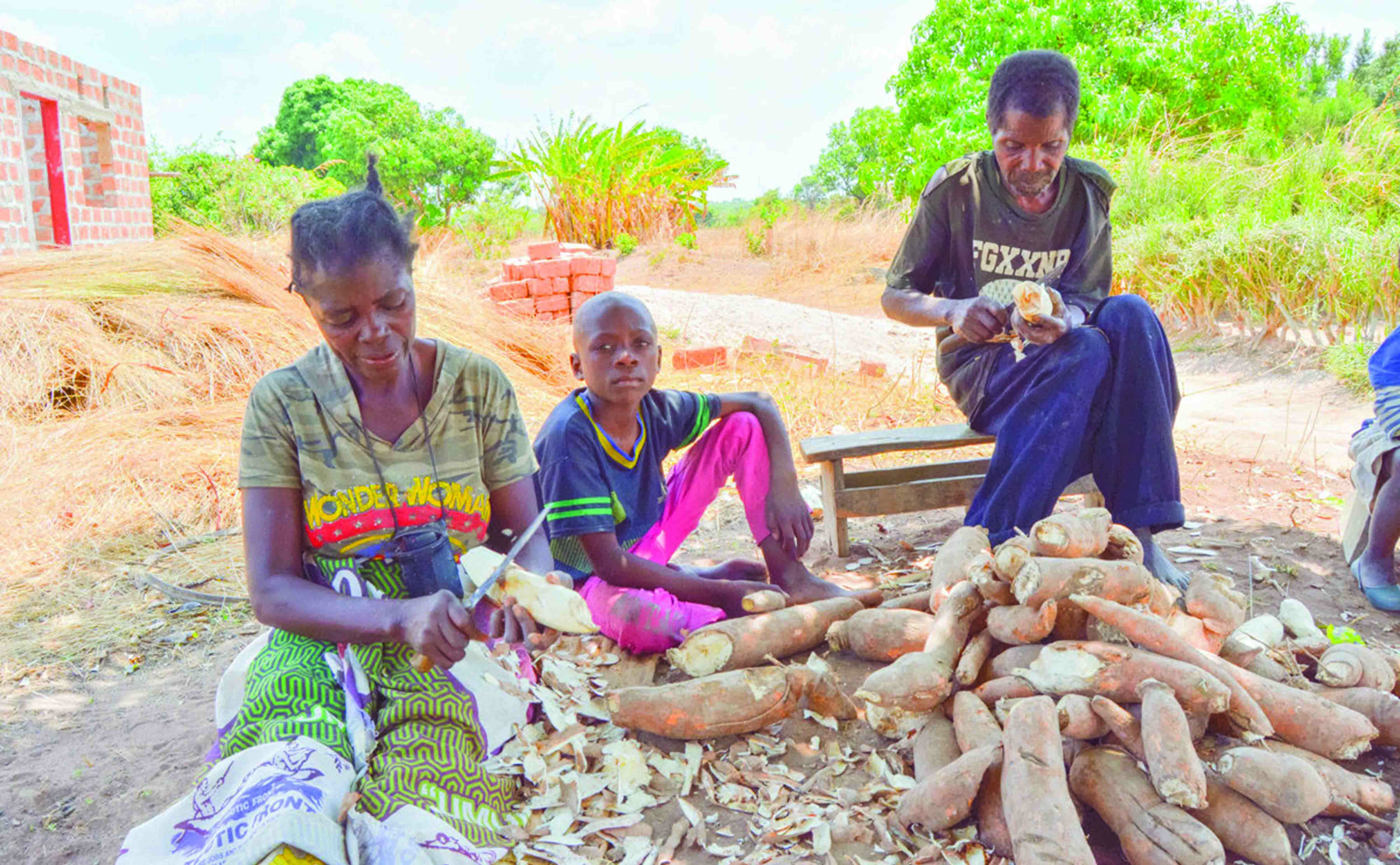A cassava processing plant will be set up in Mansa – Zambia