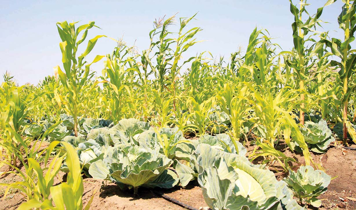 WWF stirs conservation agriculture growth