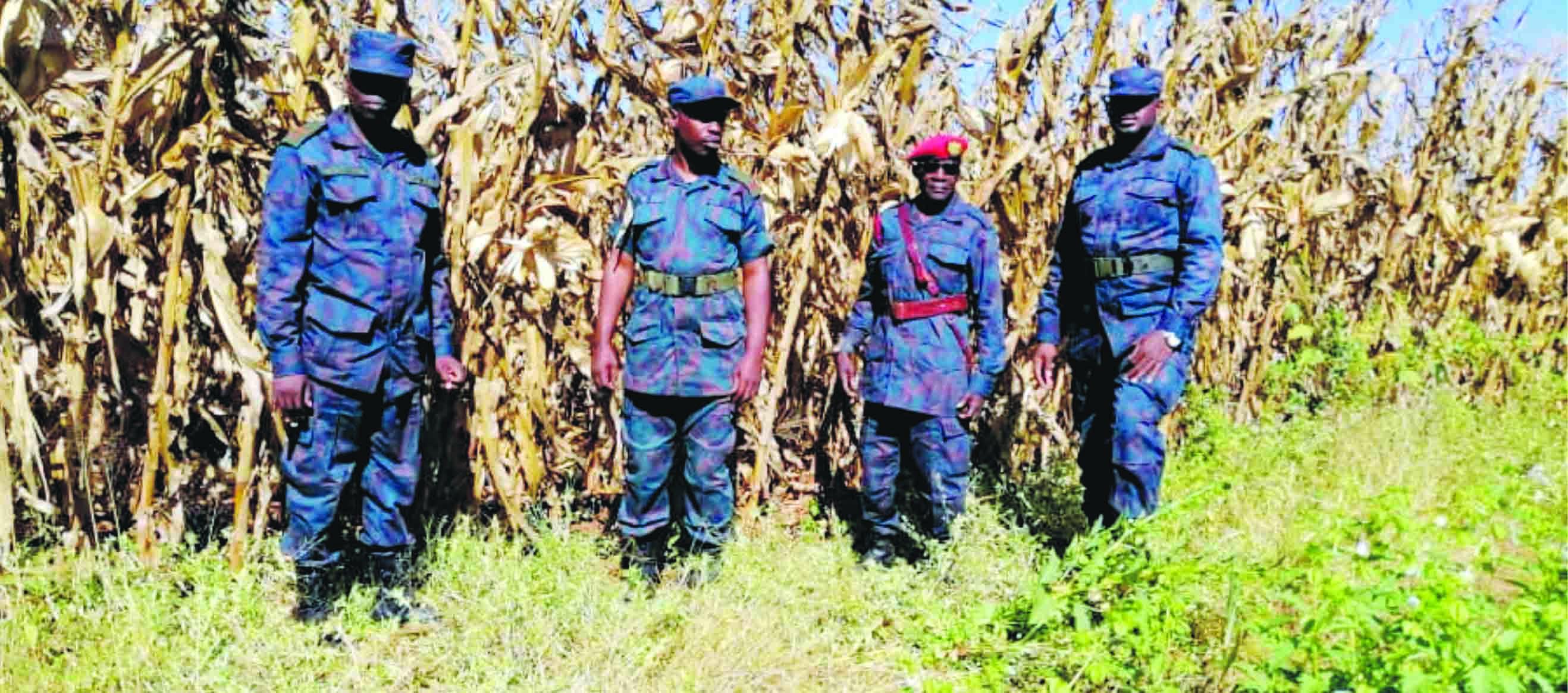 Favourable rains catapult ZNS bumper harvests
